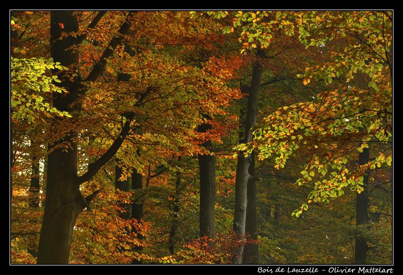 Feuillages du bois de Lauzelle