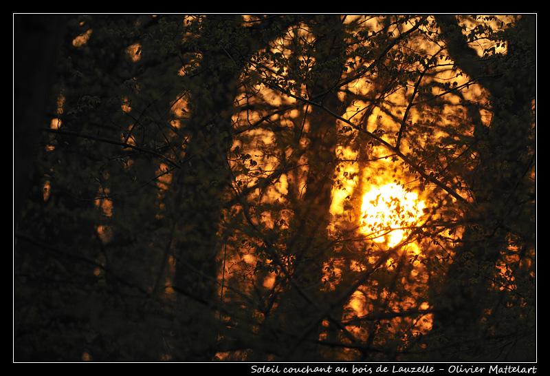 Soleil couchant au bois de Lauzelle